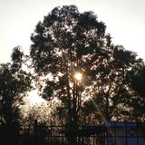 Sun atrás da árvore imagem de stock