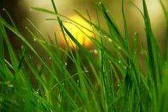 Sun atrás do orvalho da manhã da grama Imagem de Stock
