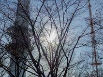 Sun atrás dos ramos de árvore foto de stock