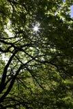 Sun através da árvore Fotografia de Stock Royalty Free