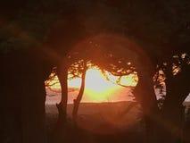 Sun através das árvores Fotos de Stock Royalty Free