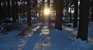 Sun através das árvores Fotografia de Stock