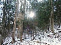 Sun através das árvores Imagens de Stock