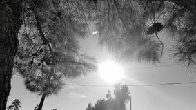Sun através das árvores Imagens de Stock Royalty Free