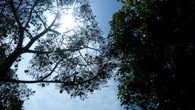 Sun através das árvores Imagem de Stock