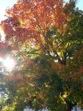 Sun através das folhas da queda foto de stock royalty free