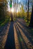 Sun attraverso gli alberi Immagini Stock Libere da Diritti