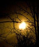 Sun attraverso gli alberi Immagine Stock