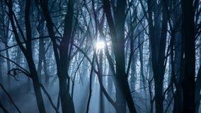 Sun attraverso la foresta nebbiosa e nebbiosa Immagini Stock