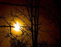 Sun attraverso le filiali di albero Immagini Stock