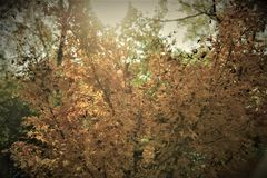 Sun attraverso un albero Fotografia Stock Libera da Diritti