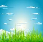 Sun au-dessus de champ d'herbe verte Photos stock