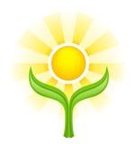 Sun au-dessus de deux feuilles vertes Images stock