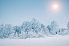 Sun au-dessus de forêt neigeuse dans la saison d'hiver Images stock