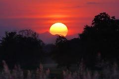 Sun au-dessus de la forêt Images stock