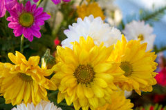 Sun auf Blume Lizenzfreie Stockbilder