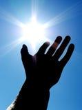 Sun auf der Palme Stockbild