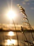 Sun auf Stroh Stockfotografie