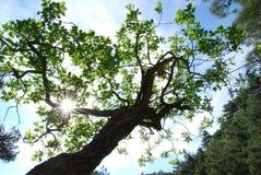 Sun auf Zweig Lizenzfreie Stockbilder