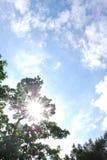 Sun auf Zweig Stockbilder