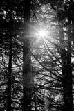 Sun-Aufflackern lizenzfreies stockfoto