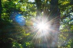 Sun-Aufflackern Lizenzfreies Stockbild