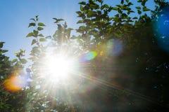 Sun-Aufflackern Stockfotografie