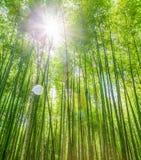 Sun-Aufflackern am Bambuswald Lizenzfreies Stockbild