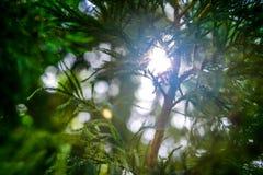 Sun-Aufflackern durch einen Baumast Hintergrund Lizenzfreie Stockfotos
