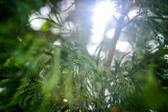 Sun-Aufflackern durch einen Baumast Hintergrund Stockfotografie