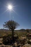 Sun-Aufflackern im Himmel über einem Bebenbaum, Richtersv Stockbild