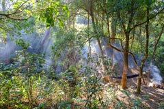 Sun-Aufflackern laufen den Nebel oder den Rauch zwischen grüne Blätter durch Lizenzfreie Stockfotos