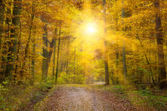 Sun in autmn forest. Path with orange trees and sun rays in autumn Royalty Free Stock Photo