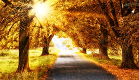 Sun in autmn forest. Way with orange trees and sun rays in autumn Royalty Free Stock Image