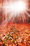 Sun in the autumn forest. Fantasy scene stock images