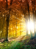 Sun in the autumn forest. Fantasy scene royalty free stock photo