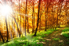 Sun in the autumn forest Royalty Free Stock Photos