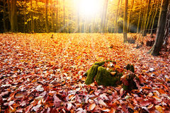 Sun in the autumn forest Royalty Free Stock Images