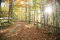 Sun in autumn forest Royalty Free Stock Photo