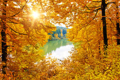 Sun in autumn forest an lake Stock Photos