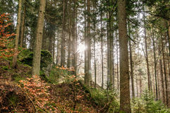 Sun in a autumn Forest Stock Photo