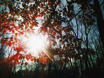 Sun in autumn leafs Royalty Free Stock Photos