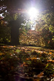 Sun Between The Autumn Trees Royalty Free Stock Photos