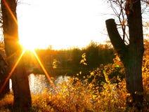 The Sun in autumn trees Stock Photo