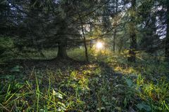 Sun in the autumn wood. The evening sun at the horizon looks out through trees in the autumn wood Royalty Free Stock Photo