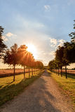 Sun Avenue. Picture of a sunny avenue at Chateau Seehof in Oberfranken / Bavaria Royalty Free Stock Photo