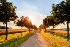 Sun Avenue. Picture of a sunny avenue at Chateau Seehof in Oberfranken / Bavaria Royalty Free Stock Photography