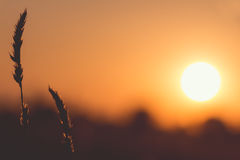 Sun in backlit Royalty Free Stock Photography
