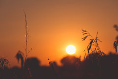 Sun in backlit Royalty Free Stock Image
