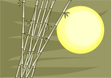 Sun bamboo and green sky. Bamboo in front of the sun with a green background Royalty Free Stock Photos